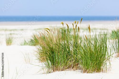 Valokuvatapetti Tuft Of Grass In Beach Dunes, Germany