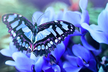 Colorful Butterfly On A Blue F...