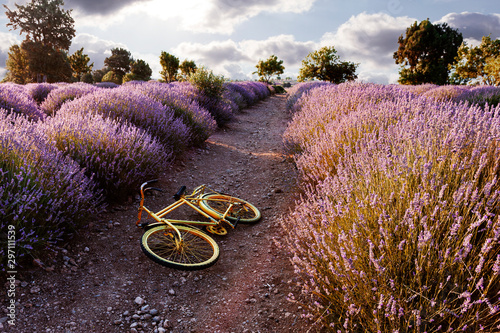 yellow bicycle in the lavender fields