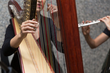 Harp Player Female Musician, H...