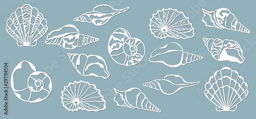 Foto Shells of the sea