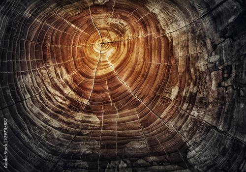 Stump of tree felled - section of the oak trunk with annual rings Tapéta, Fotótapéta