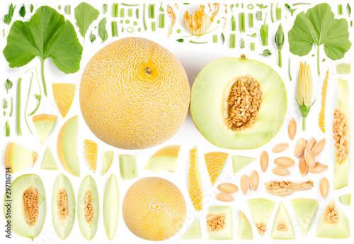 Galia Melon Collection Abstract - 297116714
