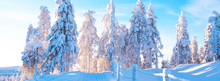 Winter Landscape With Rural Snowy Road And A Wooden Fence. Tall Trees Are Covered With Snow And The Rays Of The Sun Shine Through The Branches. Panoramic Photo