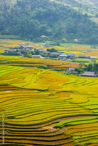 Recess Fitting Rice fields colorful rice terraces, you will feel small by its immensity and peaceful when discovery at west north area in vietnam