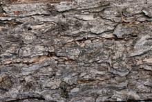 Tree Bark Texture Close Up Bac...