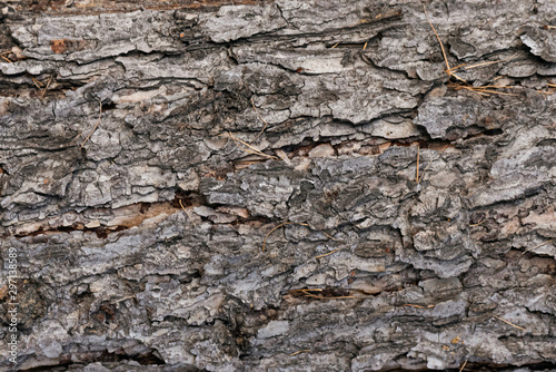 Tree bark texture close up background. Canvas Print
