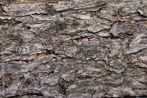 Tree bark texture close up background. Wallpaper Mural