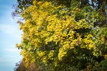 Outono Amarelo Alaranjado Vermelho Verde Marrom E Prata, Rios, Pedras, Folhas, Arvores