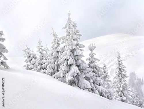 Foto auf Gartenposter Weiß Winter landscape of mountains with of fir forest in snow. Carpathian mountains
