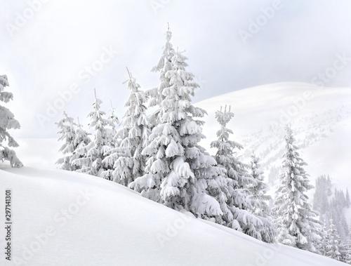 Montage in der Fensternische Weiß Winter landscape of mountains with of fir forest in snow. Carpathian mountains