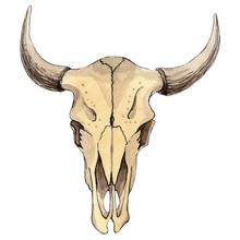 Skull Of Cow Animal Isolated. Watercolor Background Illustration Set. Isolated Skull Illustration Element.