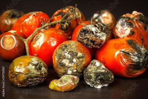 Moldy tomatoes Canvas-taulu