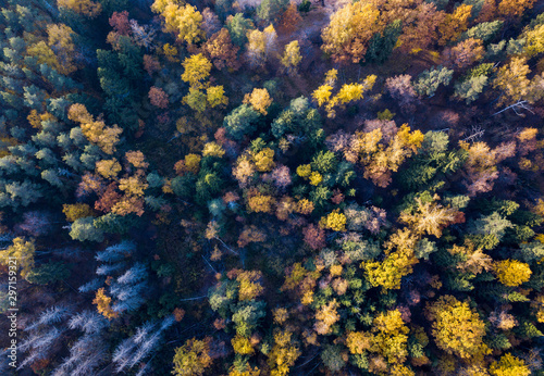 Fotobehang Herfst Aerial view of bright yellow autumn forest with yellow and green leaves and naked trunks. Autumn woodland landscape and background from a birds eye view