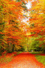 Autumn Forest Scenery. View To The Mountain. Red Leaves.  Red Leaves On A Bench. Footpath In Scene Autumn Forest Nature. Vivid October Day In Colorful Forest, Maple Autumn Trees Road Fall Way