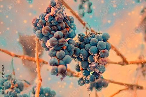 Fotografia, Obraz  Freez bunch of grapes at winter, DOF is shalow