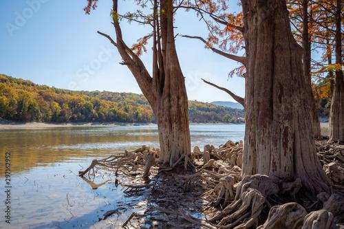 Foto auf Gartenposter Schokobraun Cypress roots close up. Cypress Lake.