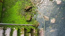 Old Stone Stairs Leading Down To Water With Stones Covered In Green Algae And Iron Railings