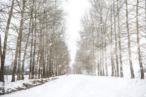 Aluminium Prints Landscapes Winter landscape of country fields and roads