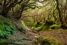 The Path Of The Enchanted Fore...