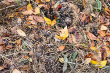 Straw And Leaves In Layers On The Garden Bed To Compost