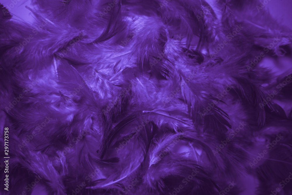 Fototapety, obrazy: Beautiful abstract pink and purple feathers on darkness background and colorful soft white blue feather texture pattern