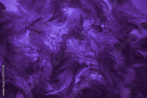 Beautiful abstract pink and purple feathers on darkness background and colorful soft white blue feather texture pattern - 297173758
