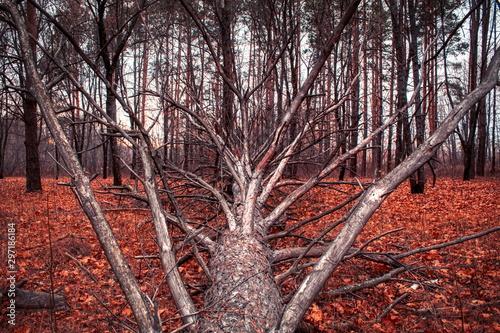 Fényképezés Branchy tree