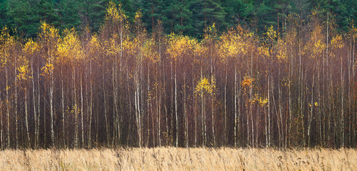 FototapetaWeb banner autumnal textural scenic background, toned in vintage style
