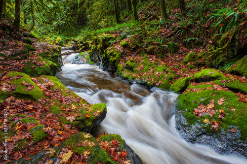 Montage in der Fensternische Forest river Rainforest Creek During the Autumnal Season. Red and yellow leaves dot the landscape along a creek in the Mt. Baker National Forest. The