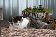 Cat Sleeping On A Log On A Background Of Flowers