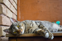 Lounging Cat