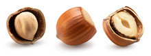 Collection Of Hazelnuts In She...