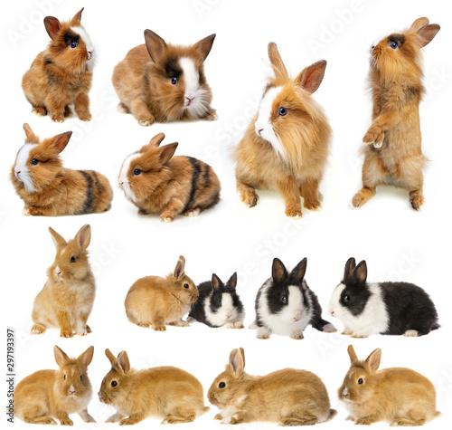 La pose en embrasure Squirrel rabbits - set , collection