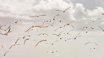 FototapetaFlock of birds flying in the storm