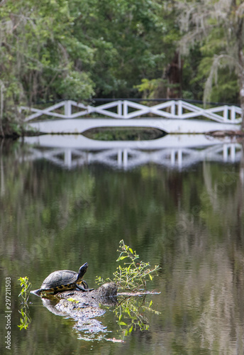 Turtle ejoying summer heat at a placid pond with a white bridge. #297211503