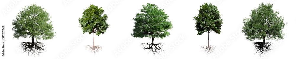 Fototapety, obrazy: trees with roots isolated on white background