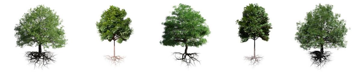 drzewa z korzeniami na białym tle