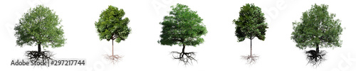 Foto trees with roots isolated on white background