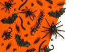 Black Halloween Creepy Crawly ...