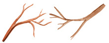 Two Brown Branches On A White Background. Bare Branches Without Leaves And Flowers, Watercolor Illustration