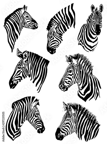 Fotomural  Graphical set of zebras isolated on white background,vector illustration for tat