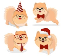 Pomeranian Dog In Three Different Poses