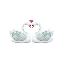 Swan Birds In Love Isolated