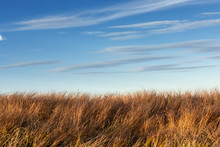 Tall Dry Grass Sway In The Win...