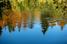 Reflection Of The Autumn Fores...