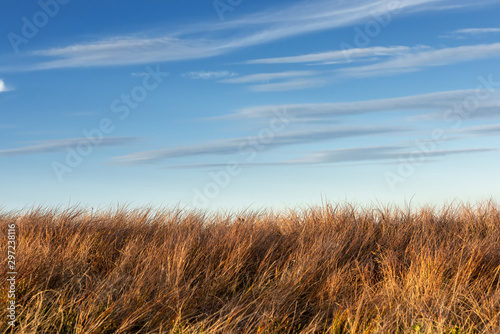 Foto auf Gartenposter Gras Tall dry grass sway in the wind on sky background