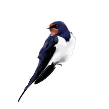 Watercolor Swallow Clip Art. Color Drawing Of Birds.