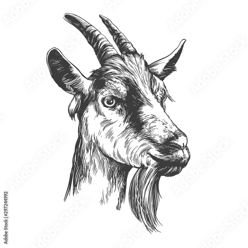 Fotomural goat hand drawn vector illustration realistic sketch