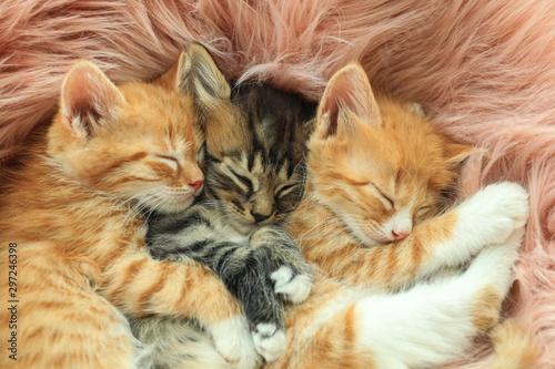 Fototapeta Cute little kittens sleeping on pink furry blanket, closeup obraz